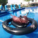 fiestas-piscinas-municipales (10)