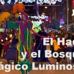 Hada-Bosque-Magico-Luminoso
