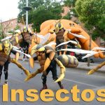 Insectos 012